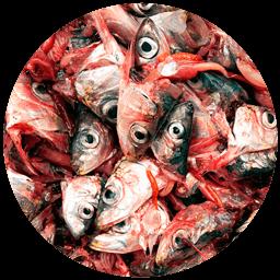 restos de pescados