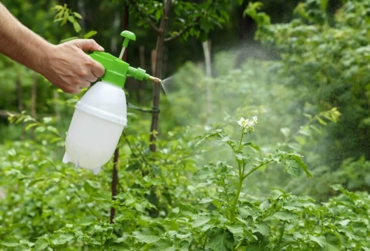Insecticidas naturales