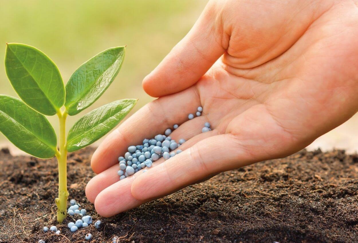 Cómo utilizar fertilizantes granulados